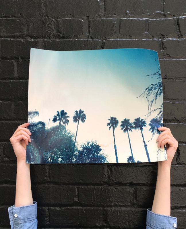 new-palm-photo-print-portrait copy